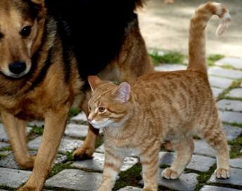 hund _katze-bilderhascher